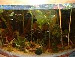 54 corner plant tank