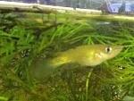 Fish in 10 gal