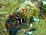 New Saltwater Aquarium