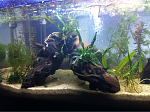 Cories, GBRs, and more