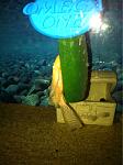 Fancy Goldfish 55
