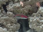 My 55g Reef