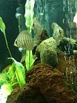 MuuMuuFish