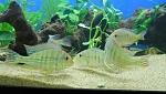 Fishies in Aquarium set up on 8/1/11