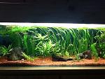 29 gal planted community tank