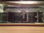 Betta spawning tank
