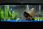 55g FW Front