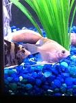My tank!