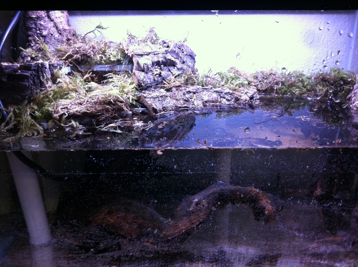 10 Gallon Paludarium Build - Aquarium Advice - Aquarium ... 10 Gallon Paludarium