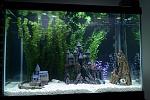 65 Gallon Aquarium