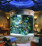 amazing aquariums