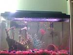 My fishies