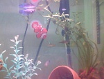 10g freshwater fishtank