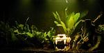 Here is the tank with the freshwater light.  I used cabana boy's idea for the shadows
