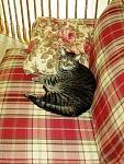 second cat