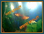 Fred & George Weasley the Sunset Platys