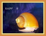 Gary the Golden Mystery Snail