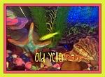 Old Yeller the Glofish