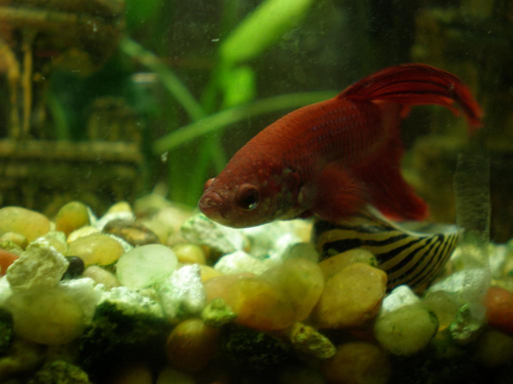August 2014 freshwater potm contest page 2 aquarium for Fish store lincoln ne