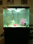 the new tank