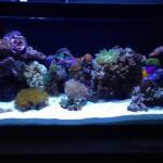 20L nano reef