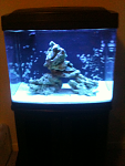 29 Gallon Oceanic Biocube