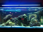 First SW Reef Tank