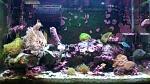 30gal reef