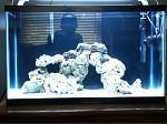 My 29gal saltwater tank