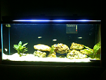 My 55g cichlid tank