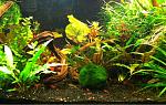 10g Shrimp Jungle