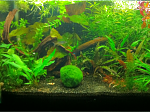 FTS (some IAL leaves are the brown patches)