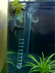 Filter: Eheim Ecco 2232 with custom acrylic Lily pipe and intake  Blasting sand substrate with root tabs