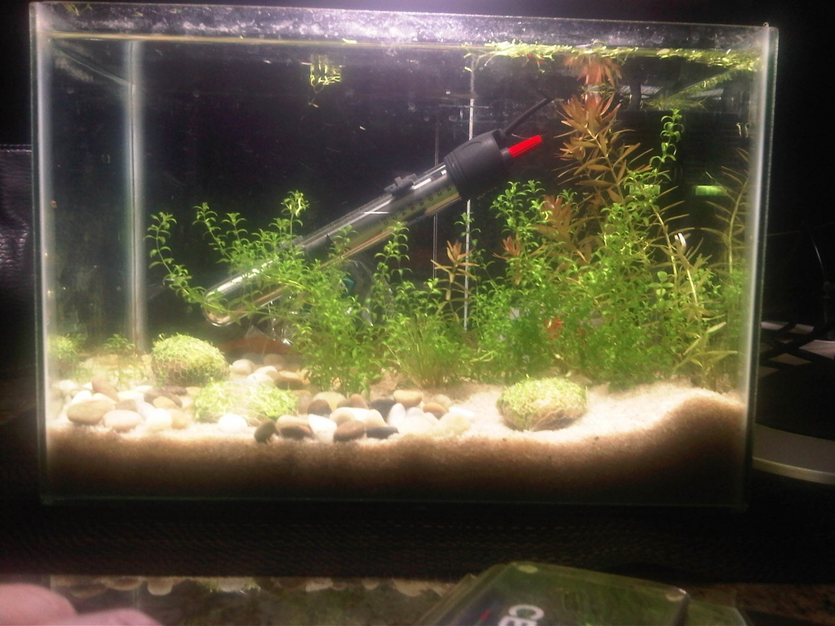 2 5 Gal Nano Aquarium Advice Aquarium Forum Community