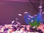Fry Tanks (20 Gal & 10 Gal)