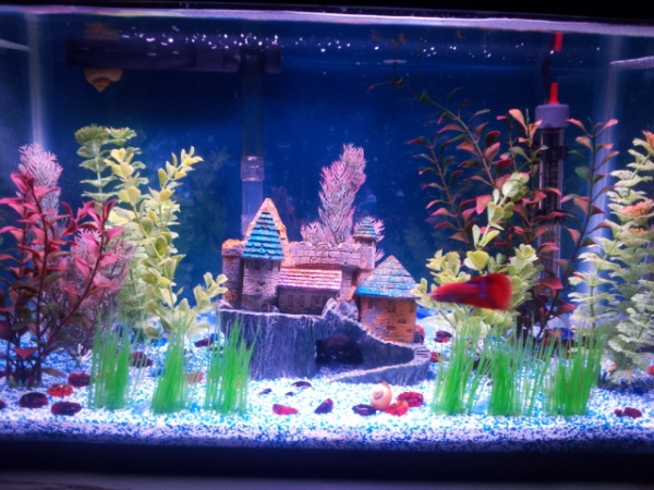 Betta aquarium joy studio design gallery best design for Cool 10 gallon fish tank