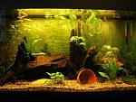 My 28.5 gal tank, 1.5 months old, 0.6W/gal  2 Keyhole cichlids   2 Honey gouramis  2 SAE