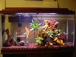 My Aquarium as currently set up!