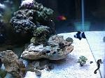 20g Reef