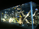 Updated pics of my 75 African Cichlid tank