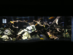 African tank as of 2/25/2013