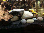 New small rock scape on sand bed 3/16/13
