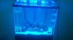 25 Gallon Reef