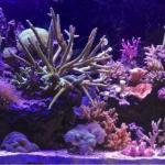 My 55 reef