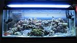 55 Gal Mix Reef