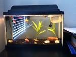 my fishie tank