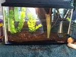 5G fry tank for now
