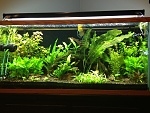 90g planted madness