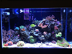 29g Mixed Reef