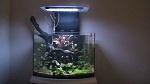 50 litre planted nano aquarium